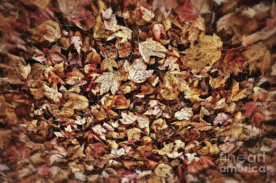 Photograph - Natures Abstract Of Fall Leaves by Lee Craig