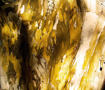 Photograph - Natures Abstractions II by Patricia Griffin Brett