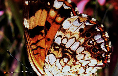Natures Abstracts Butterfly Wings 005 Art Print by George Bostian