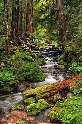 Photograph - Nature's Art by Pamela Winders