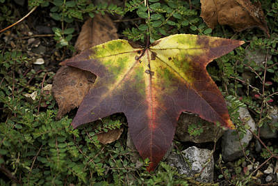 Photograph - Nature's Artwork - Autumn Leaves by Jane Eleanor Nicholas