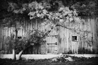 Natures Awning Bw Art Print by Julie Hamilton