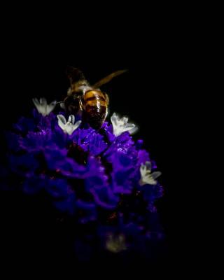 Photograph - Natures Balance by Ernie Echols