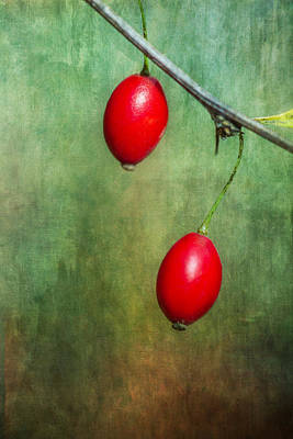Photograph - Nature's Baubles by Dale Kincaid