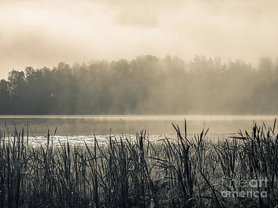 Photograph - Nature's Beauties - Spiderwebs Birds And Mist by Ismo Raisanen