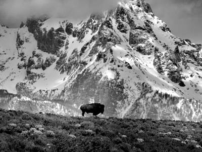 Photograph - Bison In Front Of Grand Teton by Dan Sproul