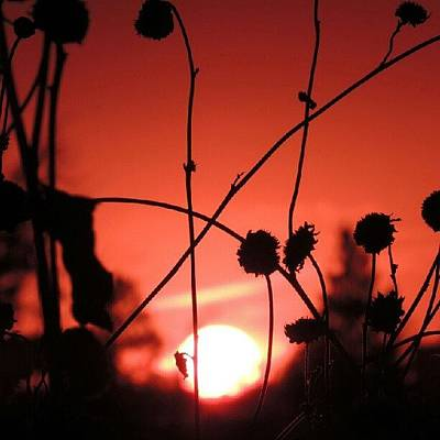 Sundown Wall Art - Photograph - Nature's Beauty Is Good For The Soul by Kelli Stowe