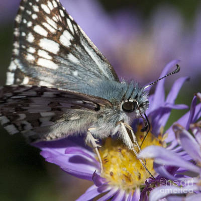 Photograph - Nature's Best Butterfly by Chris Scroggins