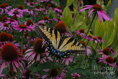 Photograph - Nature's Bliss by Geri Glavis