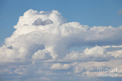 Photograph - Nature's Canvas by Cindy Singleton