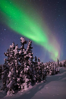 Snowy Night Photograph - Nature's Canvas In The Northern Sky by Mike Berenson