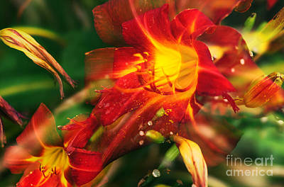 Abstract Flowers Images Photograph - Natures Color Fury by John Rizzuto