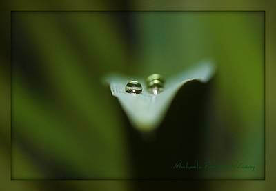 Photograph - Natures Creation by Michaela Preston