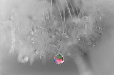 Flowers And Water Drops Wall Art - Photograph - Nature's Crystal Ball by Marianna Mills