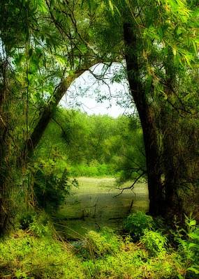 Nature's Curtain Art Print by Gothicrow Images
