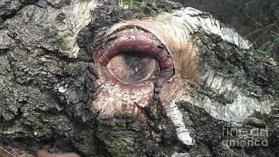 Natures Eye  Art Print by Tom Salt