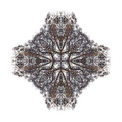Nature's Filigree Art Print by Debra and Dave Vanderlaan