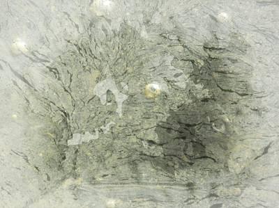 Marcia Lee Jones Photograph - Natures Green by Marcia L Jones
