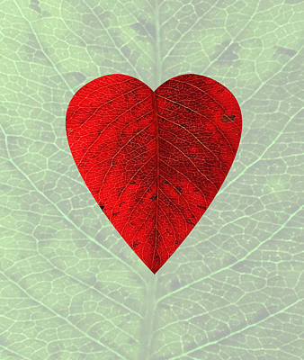 Digital Art - Nature's Heart by Deborah Smith