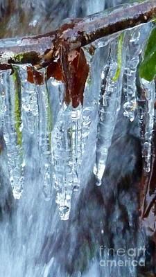 Photograph - Natures Icing by Susan Garren