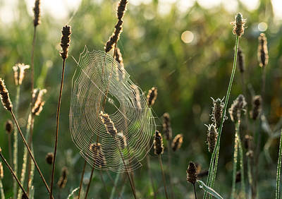 Nature's Intricacies Art Print