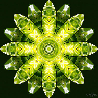 Digital Art - Nature's Mandala 12 by Derek Gedney