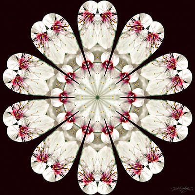 Digital Art - Nature's Mandala 13 by Derek Gedney