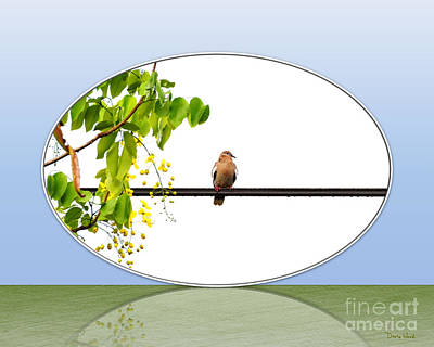Photograph - Nature's Mirror-dove On Wire by Darla Wood