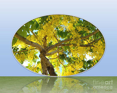 Photograph - Nature's Mirror- Golden Showers Tree by Darla Wood