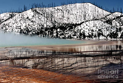 Art Print featuring the photograph Nature's Mosaic I by Sharon Elliott