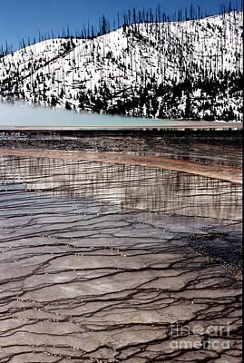 Art Print featuring the photograph Nature's Mosaic II by Sharon Elliott