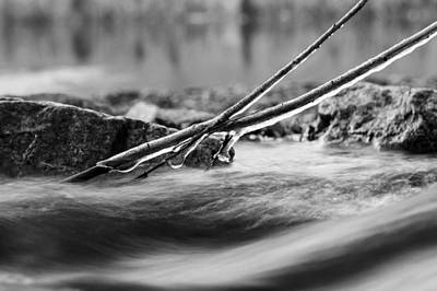 Photograph - Natures Pace Bw by Denise Dube