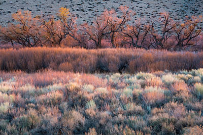 Foliage Wall Art - Photograph - Nature's Paintbrush by Mike Hitchner
