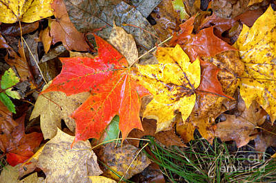 Art Print featuring the photograph Nature's Palette by Jim McCain