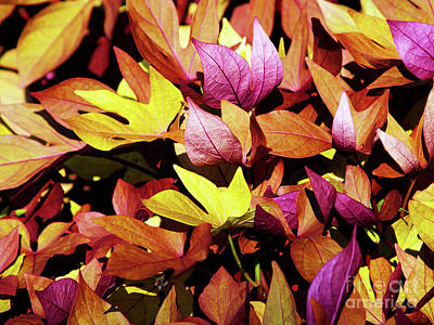 Photograph - Natures Palette by Patricia Griffin Brett