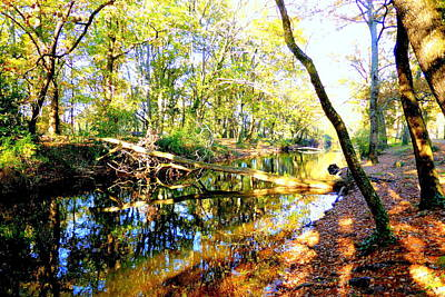 Oak Leaves Photograph - Natures Paradox by Bishopston Fine Art
