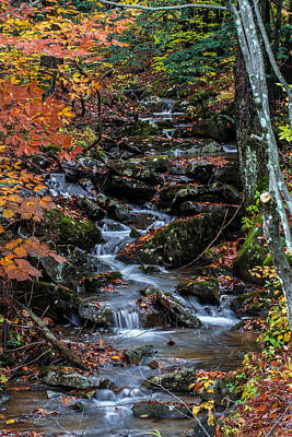 Photograph - Natures Path by Anthony Thomas