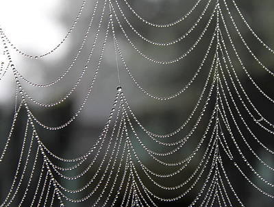 Vogel Wall Art - Photograph - Nature's Pearls by Angie Vogel
