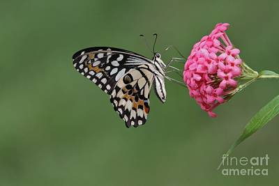 Natures Perfections Print by Gary Bridger