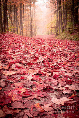New Hampshire Photograph - Nature's Red Carpet Revisited by Edward Fielding