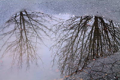 Print featuring the photograph Nature's Reflection  by Candice Trimble