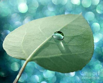Photograph - Nature's Reflections by Krissy Katsimbras