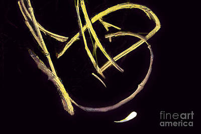 Digital Art - Natures Root Signature by Georgianne Giese