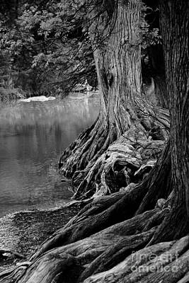 Tree Roots Photograph - Natures Roots by Gayle Johnson