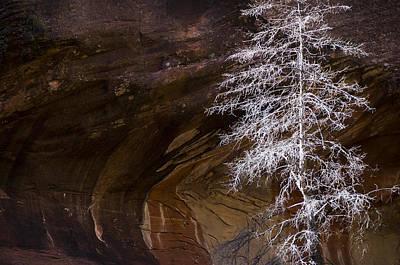West Fork Photograph - Nature's Simplicity  by Saija  Lehtonen