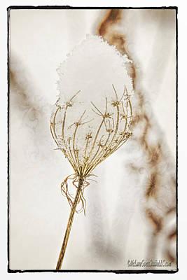 Crystal Photograph - Natures Snow Cone by LeeAnn McLaneGoetz McLaneGoetzStudioLLCcom