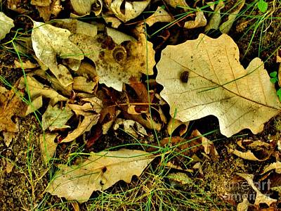 Photograph - Nature's Still Life by Marilyn Smith