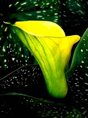 Yellow And Green Floral Photograph - Nature's Symphony by Karen Wiles