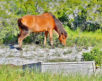Photograph - Nature's Treasure - Wild Horses Of Assateague Island by Kim Bemis