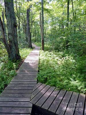 Photograph - Nature's Walkway by Mary Lou Chmura